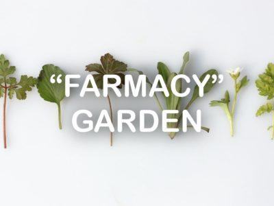 """""""Farmacy"""" Garden"""