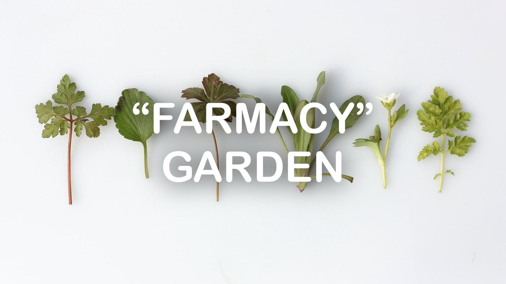 class_Farmacy Garden